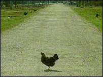 Chicken on Russian village road