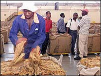 Zimbabwe's tobacco auction floor