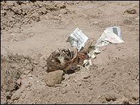 Human remains at the Abu Ghreib prison