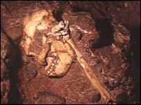 Australopithecus fossil