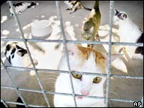 Stray cats in Singapore, recently brought to a pet farm by animal lovers