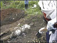 Red Cross worker buries a body in DR Congo