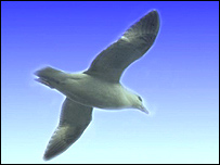 A seagull
