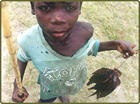 A young boy holds his catch of fish in Mozambique