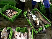 Cod in boxes in market   PA