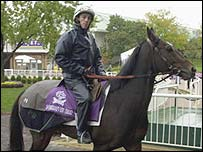 Domedriver won the Breeders' Cup Mile