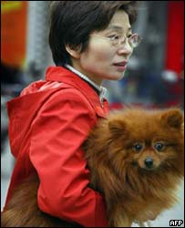A woman carries her pet dog in Shanghai
