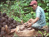 Harvesting nuts