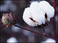 Cotton, Monsanto
