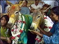 Donkey marriage in Bangalore