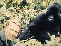 David Attenborough with a gorilla