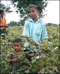 Child labourers in Andhra Pradesh cotton field