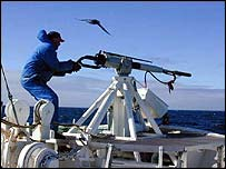 Norway whaler aims harpoon [pic courtesy of High North Alliance]