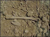 Human bones on the cemetery