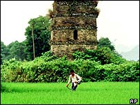 Ancient pagoda in the middle of a rice field