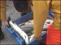 Salmon in box