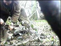 A still from the IFAW video