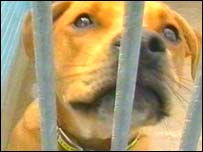 Dog waiting to be rehomed at The National Canine Defence League