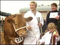 Winning bull at the Devon County Show