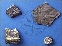 Scott's plant fossils (Natural History Museum, London)
