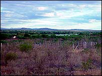Caatinga wilderness
