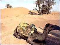 Sahara desert, BBC