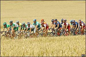 The peloton sweeps through corn fields