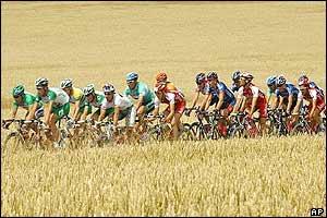 The peloton sweeps through corn fields