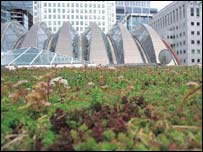 Canary Wharf: credit Mathew Frith/English Nature