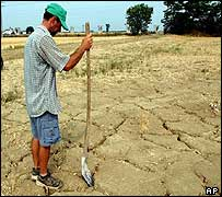 Italian farmer surveys dried-up field