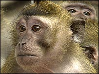 Primates, RDS/Wellcome Trust photo