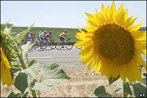 Lance Armstrong and the pack ride past a sunflower field