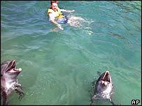 Delfines en las Islas Salom�n
