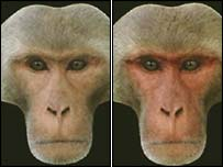 Monkey composite images (University of Stirling/Royal Society)