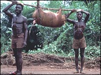 Africans carrying bushmeat