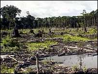 Deforested rainforest   BBC