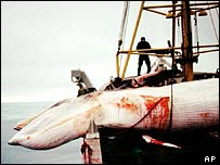 Dead minkes on boat   AP