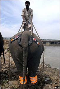 An elephant in Delhi having reflective badges fitted