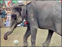 Elefante juega con una pelota
