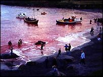 The sea is red with blood after the whales have been killed. (Image courtesy Sue Dobson)