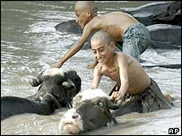 Boys washing animals in a canal