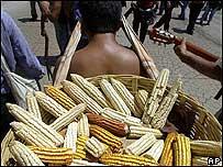 Recolector de maíz.