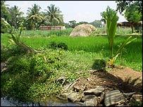 Karnataka field