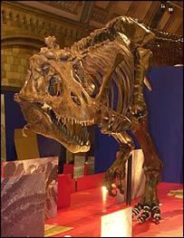 Dino, BBC