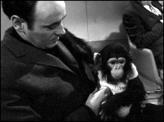 Desmond Morris pictured with baby chimpanzee
