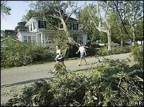 Árboles arrancados por el huracán