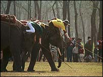 Elephant polo - image supplied by elepolo.com
