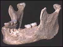 Jaw, PNAS