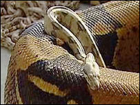Generic image of a snake