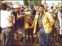 Karakul Cattle Market, Kyrgyzstan
